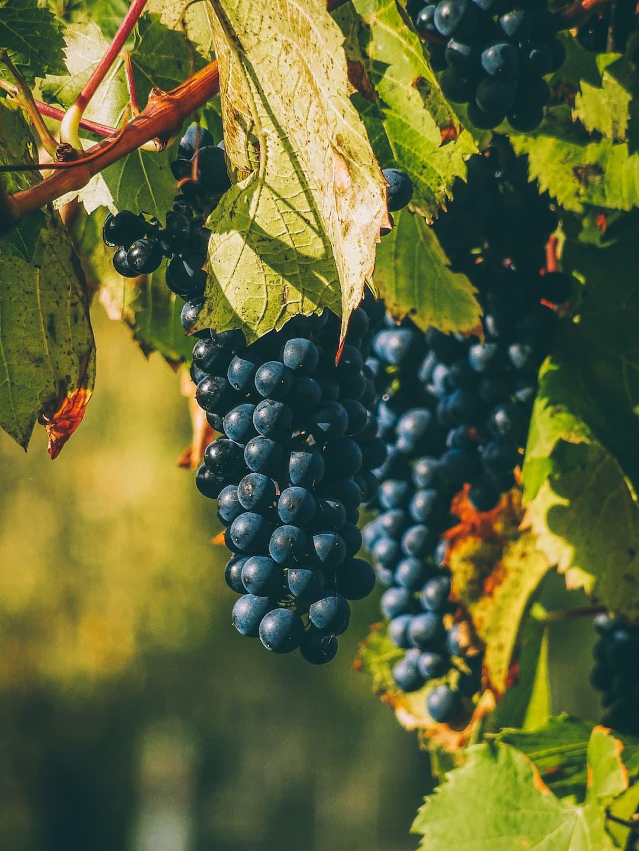 Il Vinificio - Vineria ad Avigliana